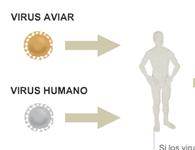 El virus de la gripe aviar